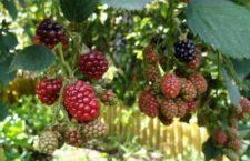 Du chômage vers le plus splendide des jardins en permaculture