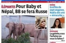 Journalisme de proximité ? Le Progrès et les éléphantes
